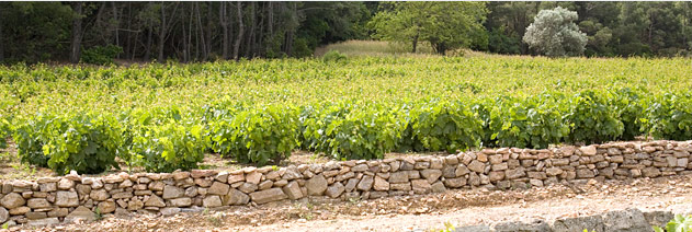samos-vineyard